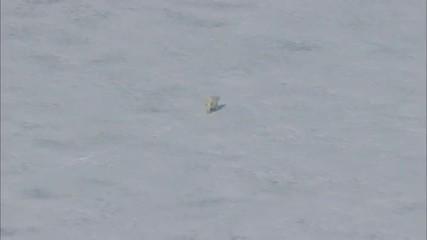 Polar Frozen Tundra Polar Bear