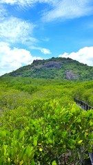 Mangrove national park in Thailand