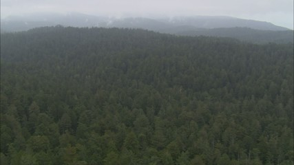 Forest Treetop Fog