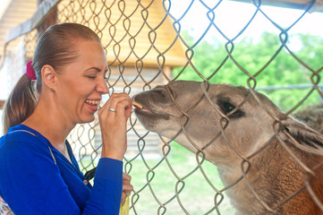 feeding lama