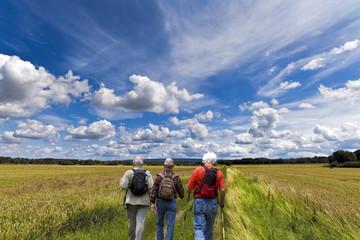 Wanderer durchs Kornfeld