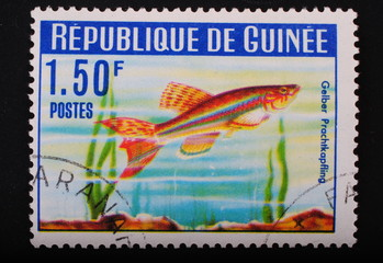 Guinea Postage stamp aquarian fish on green algae background