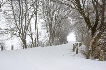 snowfall - winter landscape