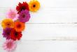 canvas print picture - Gerbera Hintergrund