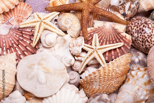 Fototapeta background of various seashells, starfish and seahorse