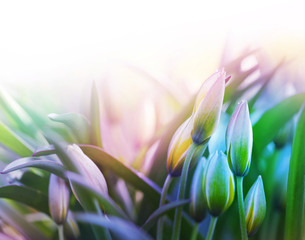 flower bud in green grass