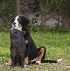 puppy dog and puppy pig, friends