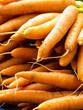 Frische Karotten