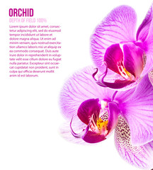 two orchid flower