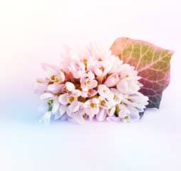 Spring snowdrop flower. Vintage style.