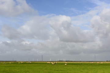 sheep and wind turbines at Romney Marsh