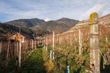 Vigneto, Trentino Alto Adige, Italia
