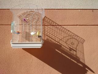 Canario en jaula