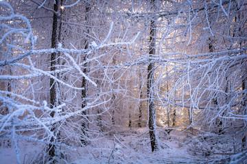 Märchenwald mit vereisten Zweigen und Sonnenstrahlen