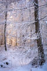 romantisch verschneiter Winterwald
