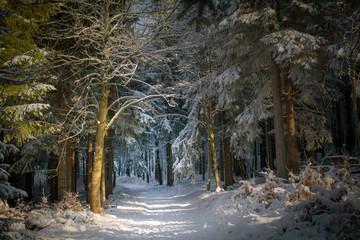 märchenhafter Winterwald mit schneebedecktem Wanderweg