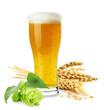 Leinwandbild Motiv glass of beer with wheat and hops isolated on the white backgrou