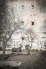 Old wall with graffiti and bare tree