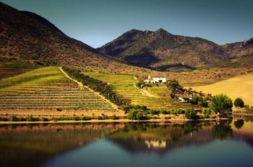 Douro Landscape IV