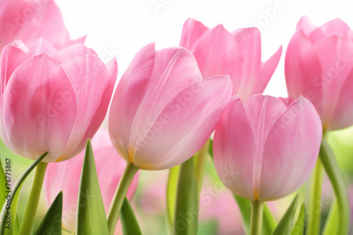 Deurstickers Tulp Fresh tulip flowers