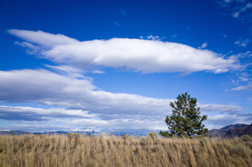 Layers of fluffy white cloud in a bright blue sky