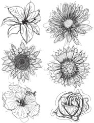 Assorted flower head sketches