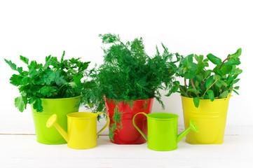 Flavoring greens in buckets