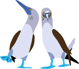 cute blue-footed booby couple vector