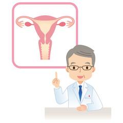 子宮 女性のからだ 医師