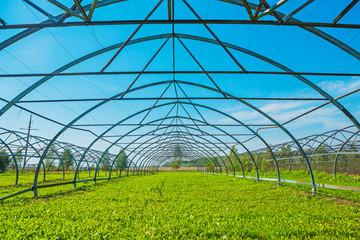 opened empty greenhouse