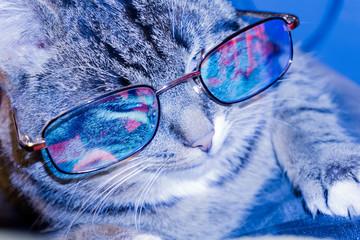 Cat in Eyeglasses