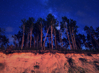 Pins trees above sand coast at night sky background with stars