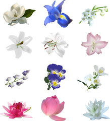set of twelve isolated blooms