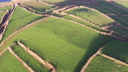 Flying Over the Agricultural Green Fields, Sao-Miguel Azores