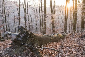 Deutschland, Rheinland-Pfalz, Wald im Winter