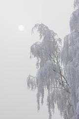 Deutschland, Rheinland-Pfalz, Baum im Winter