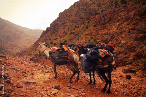 Poster Ezel A pair of moroccan donkeys resting with their carriage on the ad