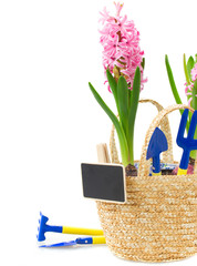 Gardening tools with pink hyacinth and tulips