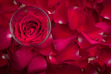 A red rose in a glass on the red rose petal as a background