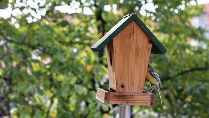 Birds Titmouse feeding on a small wooden birds house