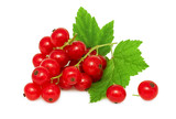 One bunch of ripe redcurrant with green leaves (isolated)