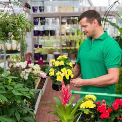 blühende pflanzen aussuchen