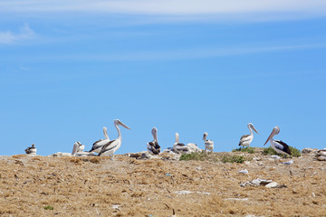 Pelican sanctuary and marine birds