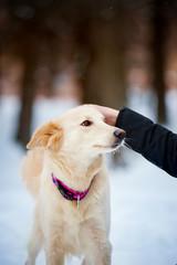 Lovely purebreed dog training
