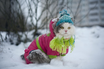 cat in winter clothes on a walk
