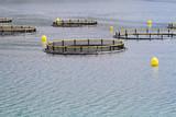 Aquaculture nets poster