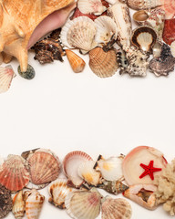sea shell. isolated on white background