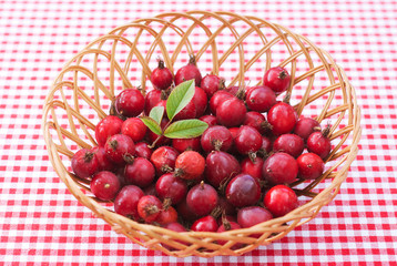 Bowl of red rosehips on red background with green leaf