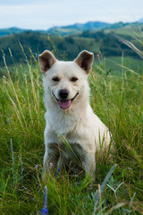 White dog sitting in the grass on the hillside