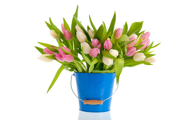 Pink and white tulips in blue bucket